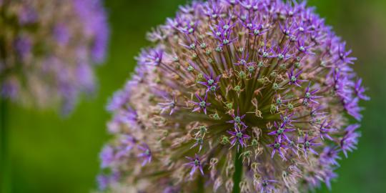 Blütenpracht ganz groß: Der Botanische Garten (2)