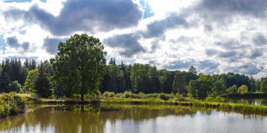 Natur pur: Die Tirschenreuther Teichpfanne (2)